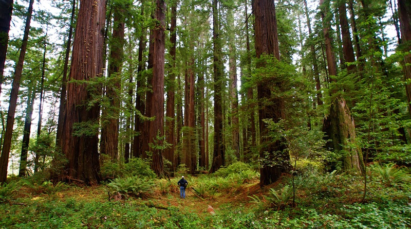 Grizzly Creek Redwoods California State Park- Among the Giants