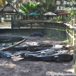 St. Augustine Family Attractions – Alligator Farm Zoological Park #BayouTravel