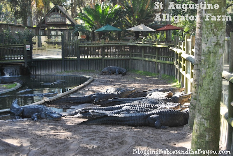 St Augustine Alligator Farm - St. Augustine Family Attractions #BayouTravel