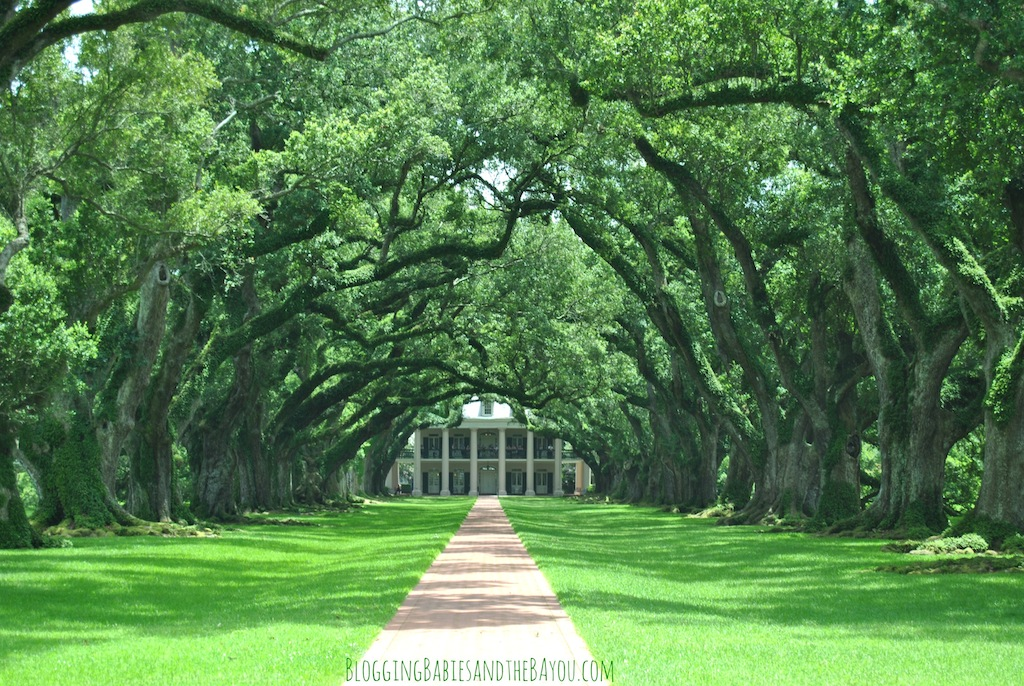 Oak Alley - New Orleans Area Plantation Tours #BayouTravel