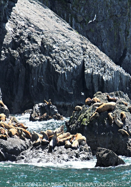 Regional Animals of Alaska - Sea Lions