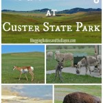 Wildlife Viewing at Custer State Park: South Dakota's Largest and First State Park #BayouTravel