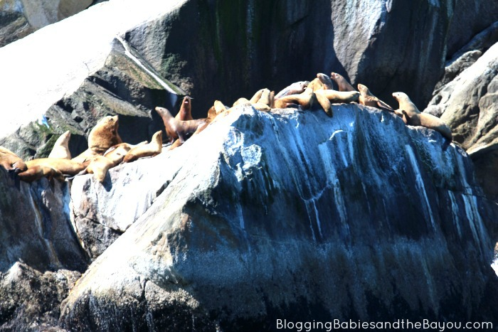 Alaska the Beautiful - Sea Lions #BayouTravel