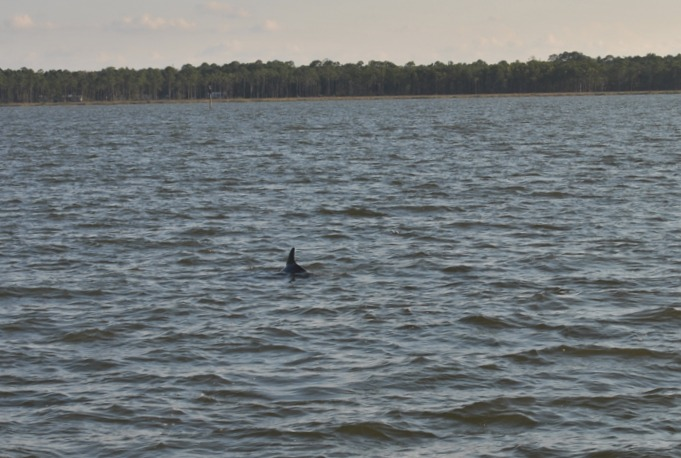 Alabama Gulf Coast & Orange Beach Family Attractions and Activities  Dolphin & Nature Cruises by Cetacean Cruises #BayouTravel
