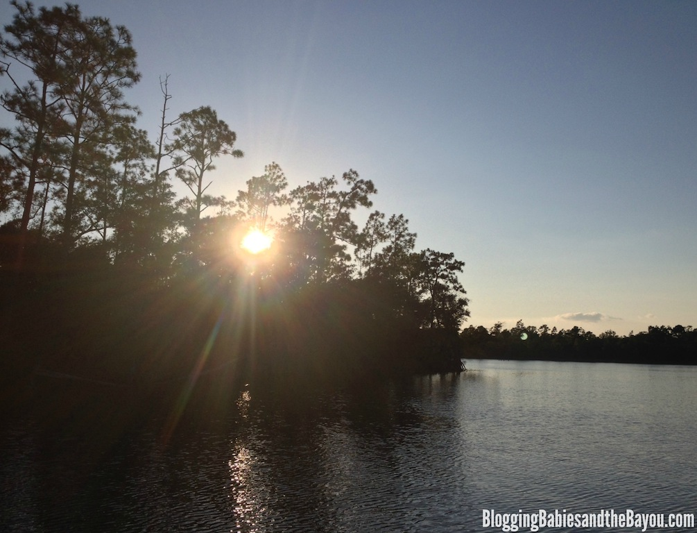 Sunsets, Dolphins and more - Alabama Gulf Coast & Orange Beach Family Attractions and Activities - Dolphin & Nature Cruises by Cetacean Cruises #BayouTravel