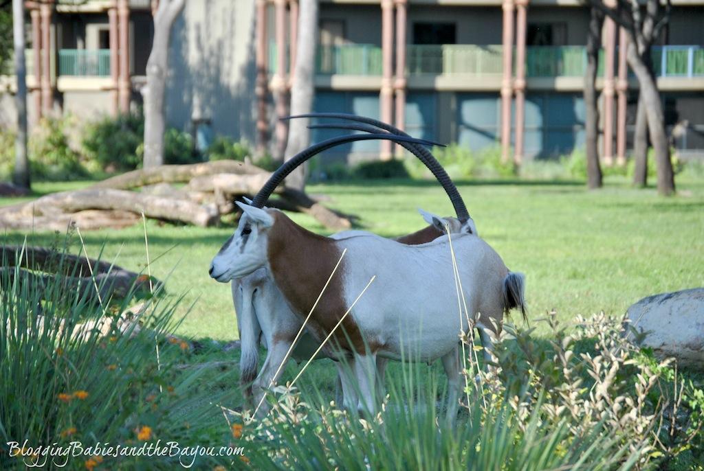 Animal Kingdom Lodge Recap - Sanaa - Disney Dining Option at Animal Kingdom Resort  #BayouTravel