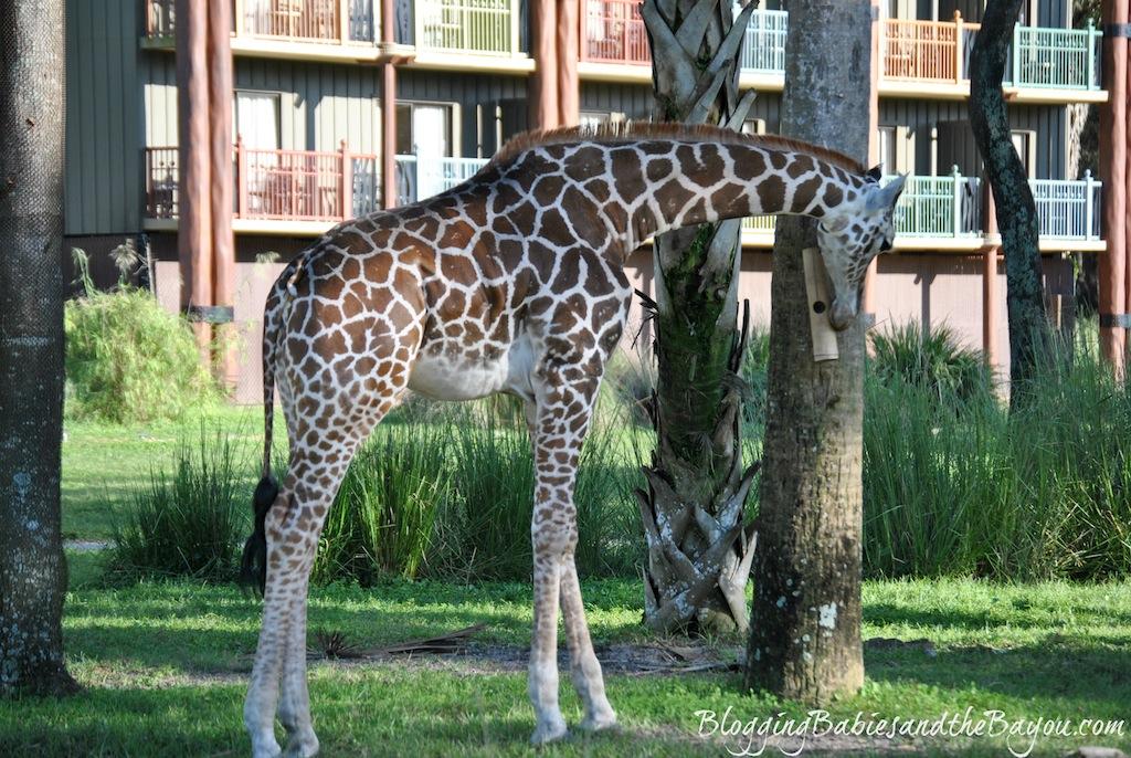 Animal Kingdom Lodge - Relaxation at Walt disney World Resorts #BayouTravel