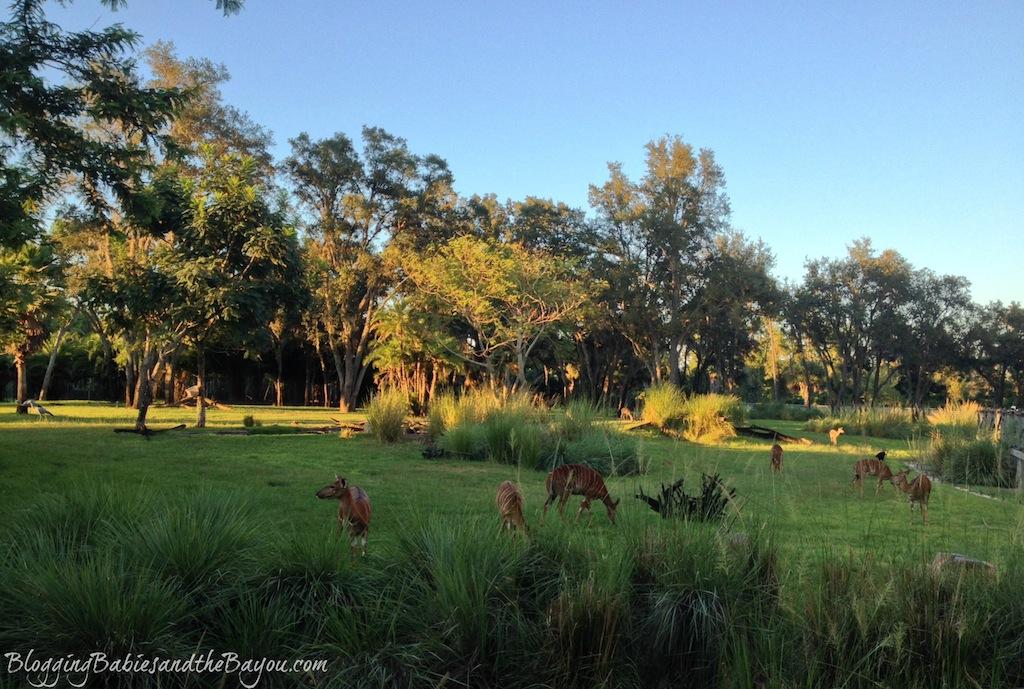 Animal Kingdom Lodge - Walt Disney World Wildest Resort - Free Childrens Activities #BayouTravel