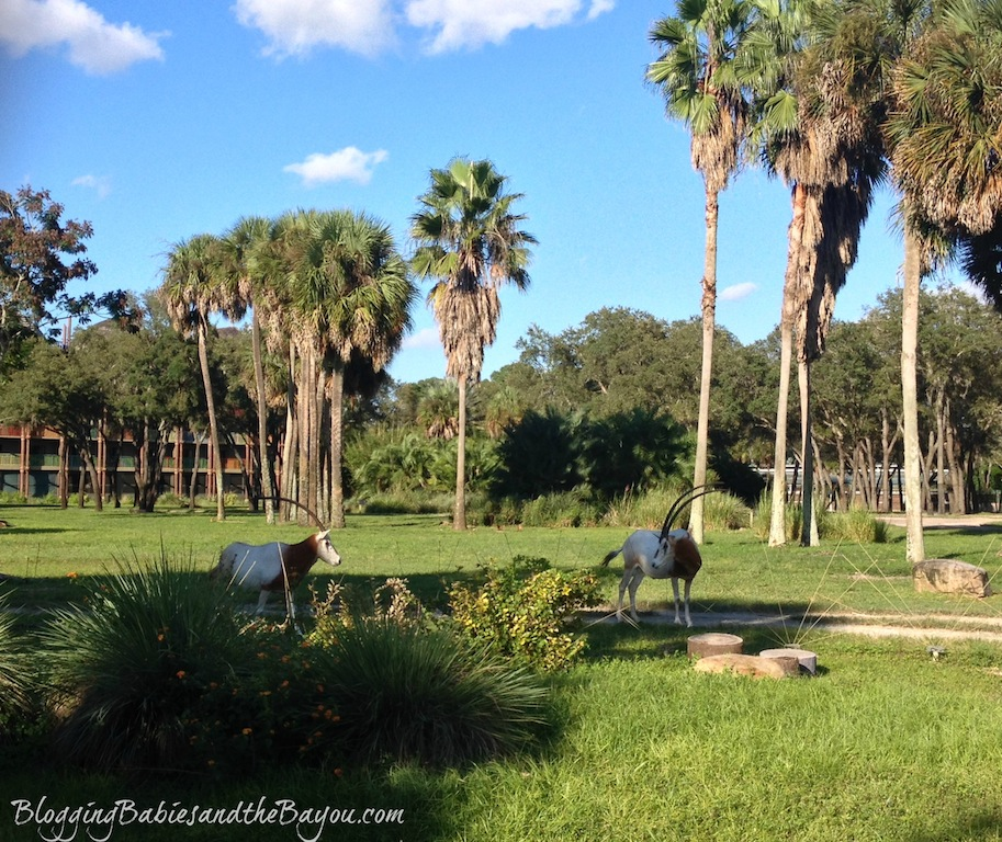 Animal Viewings at Animal Kingdom Lodge - Walt Disney World Resort #BayouTravel