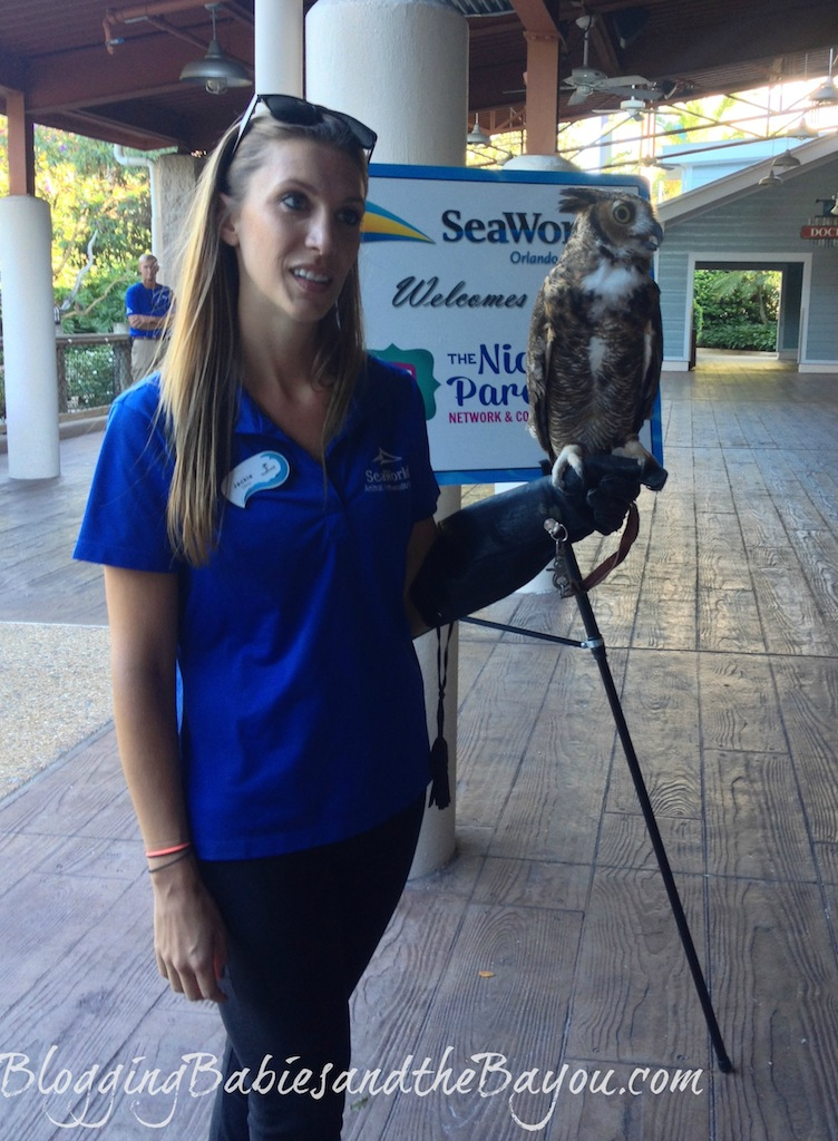 Animal Education at Sea World Orlando Florida - Educational Travel in the U.S #BayouTravel