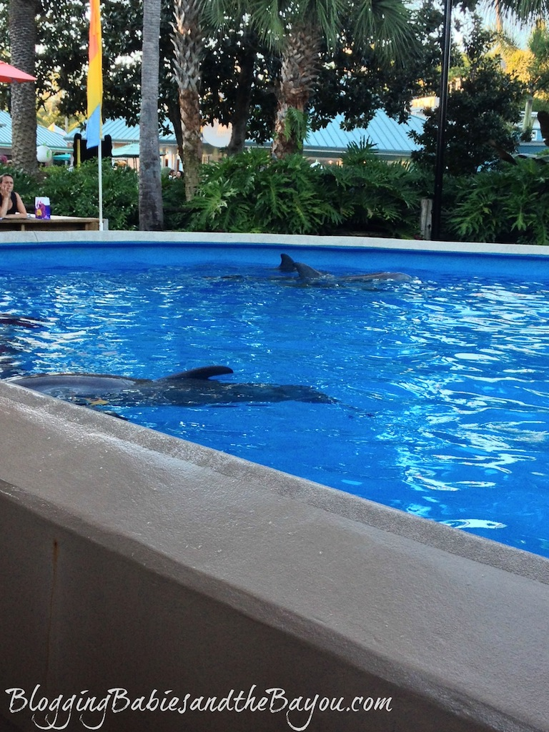 Beyond the Rollercoasters - what to do at Sea World with Small Children #BayouTravel
