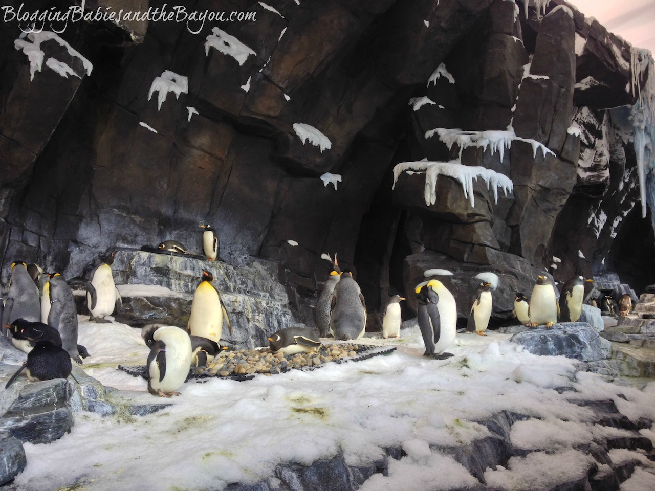 Empire of the Penguins Exhibt at Sea World Orlando Florida #BayouTravel