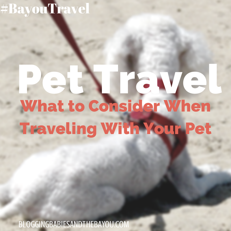Pet Travel_ What to Consider When traveling With Your Pet #BayouTravel
