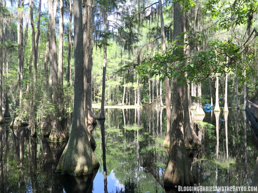 Tallhassee Museum  -  What to do in Tallahassee - Attractions and Museums in Tallahassee