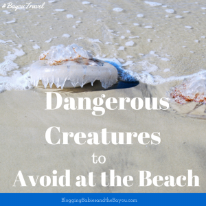 Dangerous Creatures to Avoid at the Beach  #BayouTravel