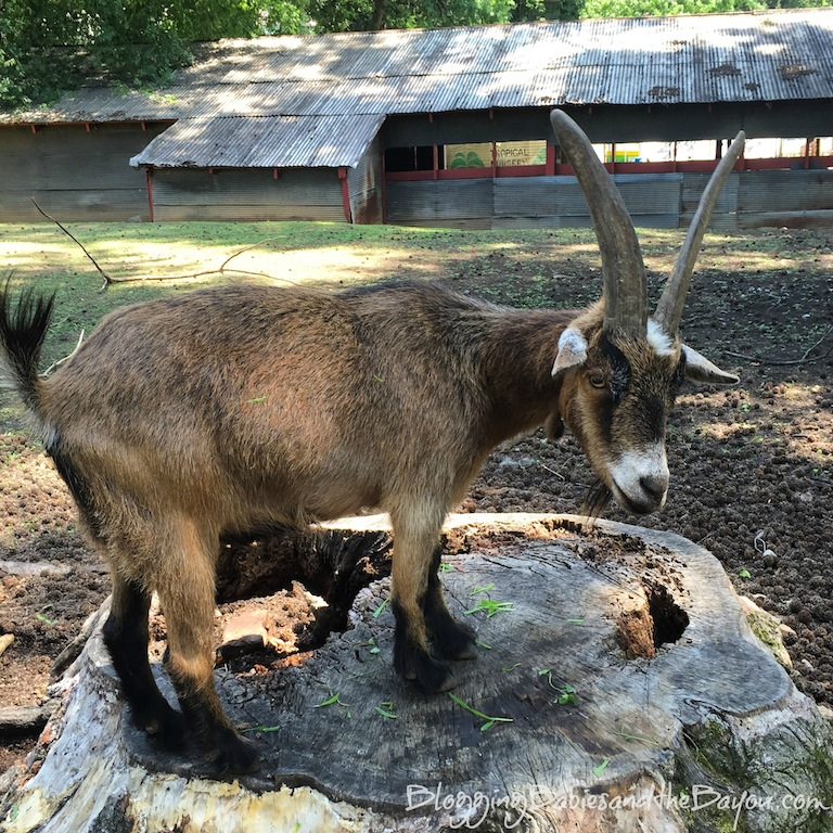 Free Area Attractions in Atlanta - The Goat Farm #BayouTravel
