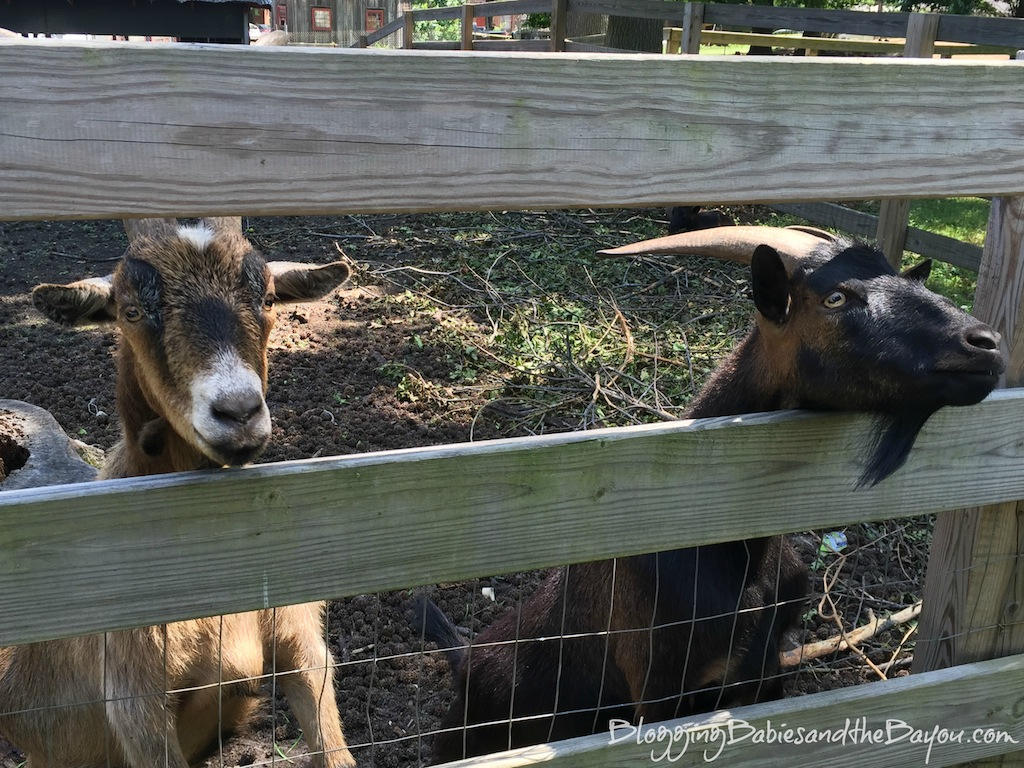 IThe Goat Farm in Atlanta Georgia - Free Attractions in Atlanta #BayouTravel