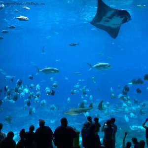 What to do in Atlanta Georgia  Family Attractions - Georgia Aquarium  #BayouTravel