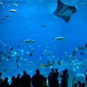 Atlanta Family Attractions: Go Wild at Zoo Atlanta & The Georgia Aquarium #BayouTravel