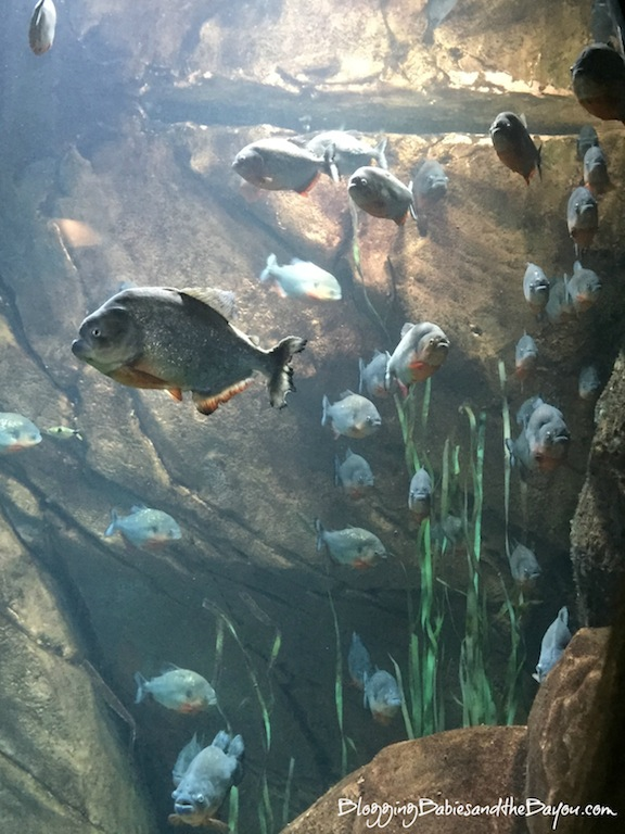 What to see or do in Atlanta Georgia  Family Attractions - Georgia Aquarium  #BayouTravel
