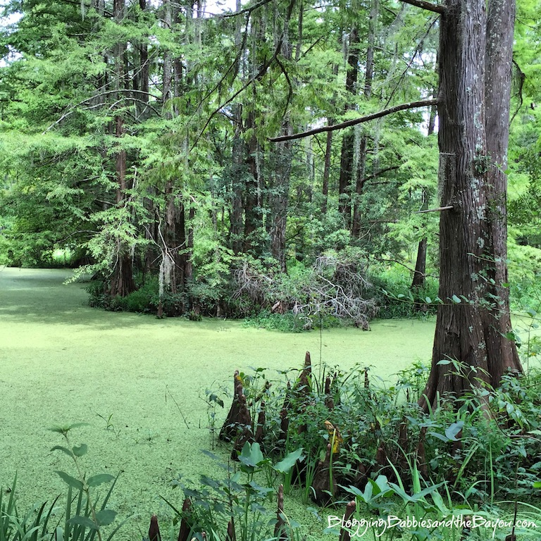 Family fun Near or Outside the New Orleans Area - Northlake Nature Center located in Mandeville ,  Louisiana #BayouTravel