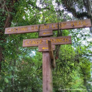 A Picturesque Walk at Northlake Nature Center in Mandeville, Louisiana #BayouTravel