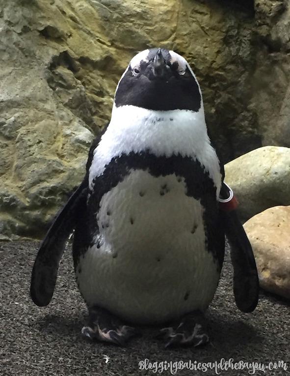 Childrens Attractions in Gatlinburg Ripleys Believe It or Not & Aquarium of the Smokies - Gatlinburg, TN