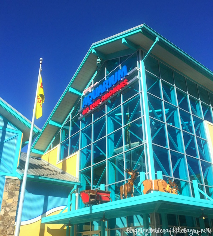 Ripleys Aquarium of the Smokies - Ripleys Believe It or Not Gatlinburg, TN