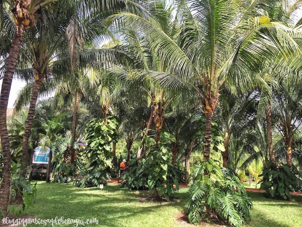 Lush Gardens at Paradise Beach Carnival Cruise Excursion Port Day - Cozumel Paradise Beach #BayouTravel
