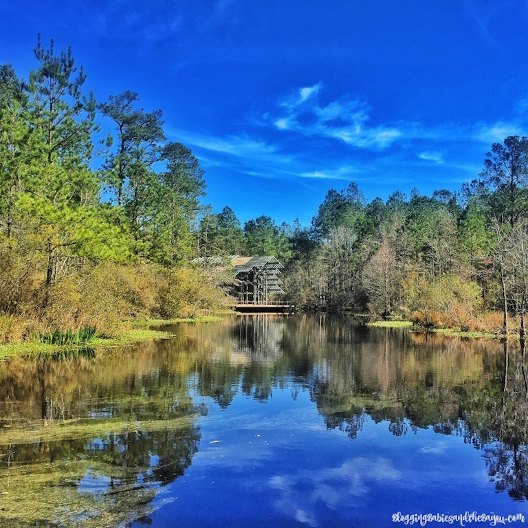 Crosby Arboretum - Outdoor Family Attractions in Picayune Mississippi #BayouTravel