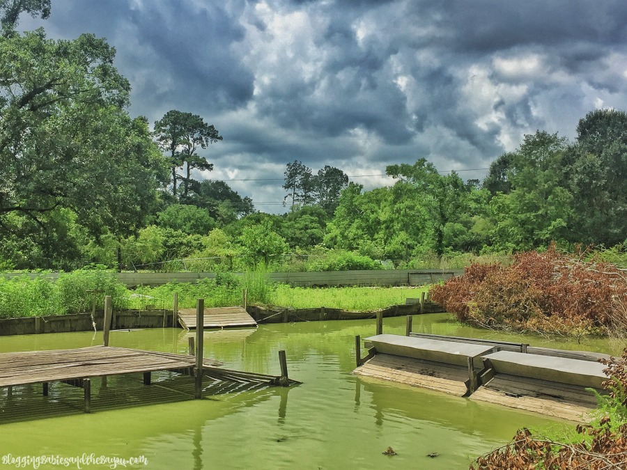 Bayou Life - Kliebert's Alligator & Turtle Farm -  Family Attractions In and Around the New Orleans Area