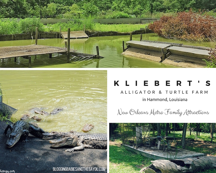 Kliebert's Alligator & Turtle Farm in Hammond Louisiana - New Orleans Metro Family Attractions