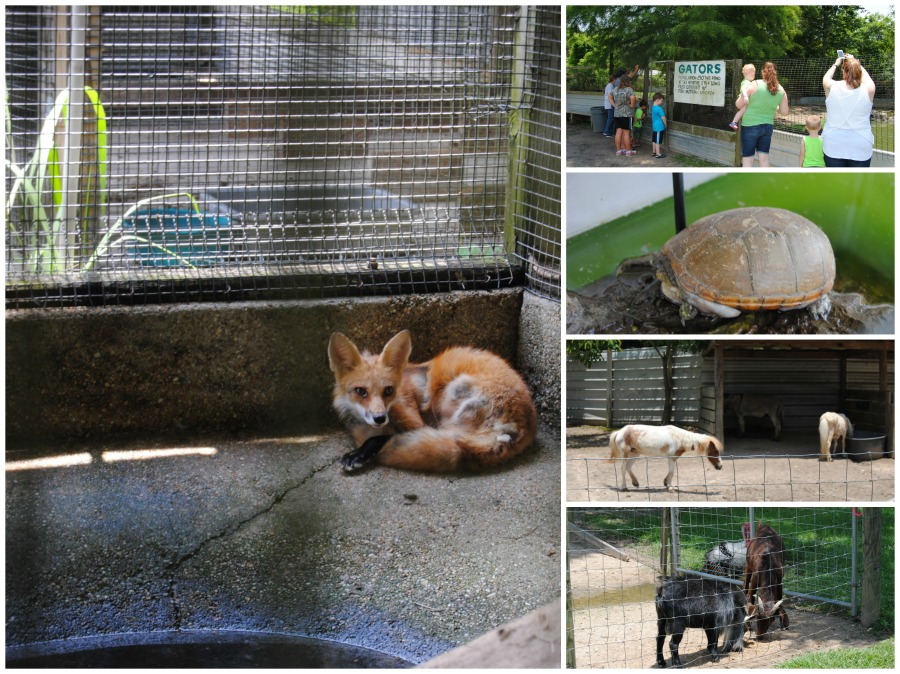 Other Animals found at Kliebert's Alligator & Turtle Farm -  Family Attractions In and Around the New Orleans Area